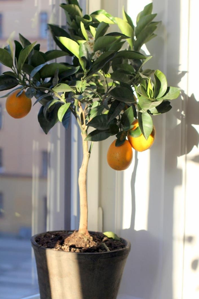 Winterize Citrus Trees in Anthem